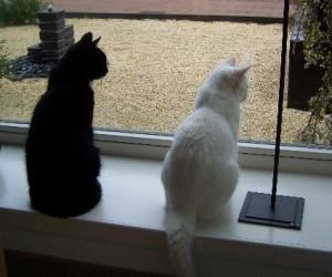 Snoebel en Kruumelke voor het raam